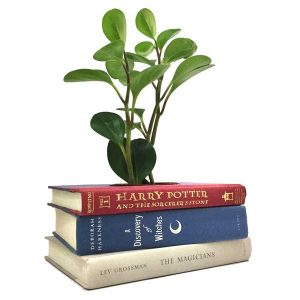Witches and Wizards Book Planter