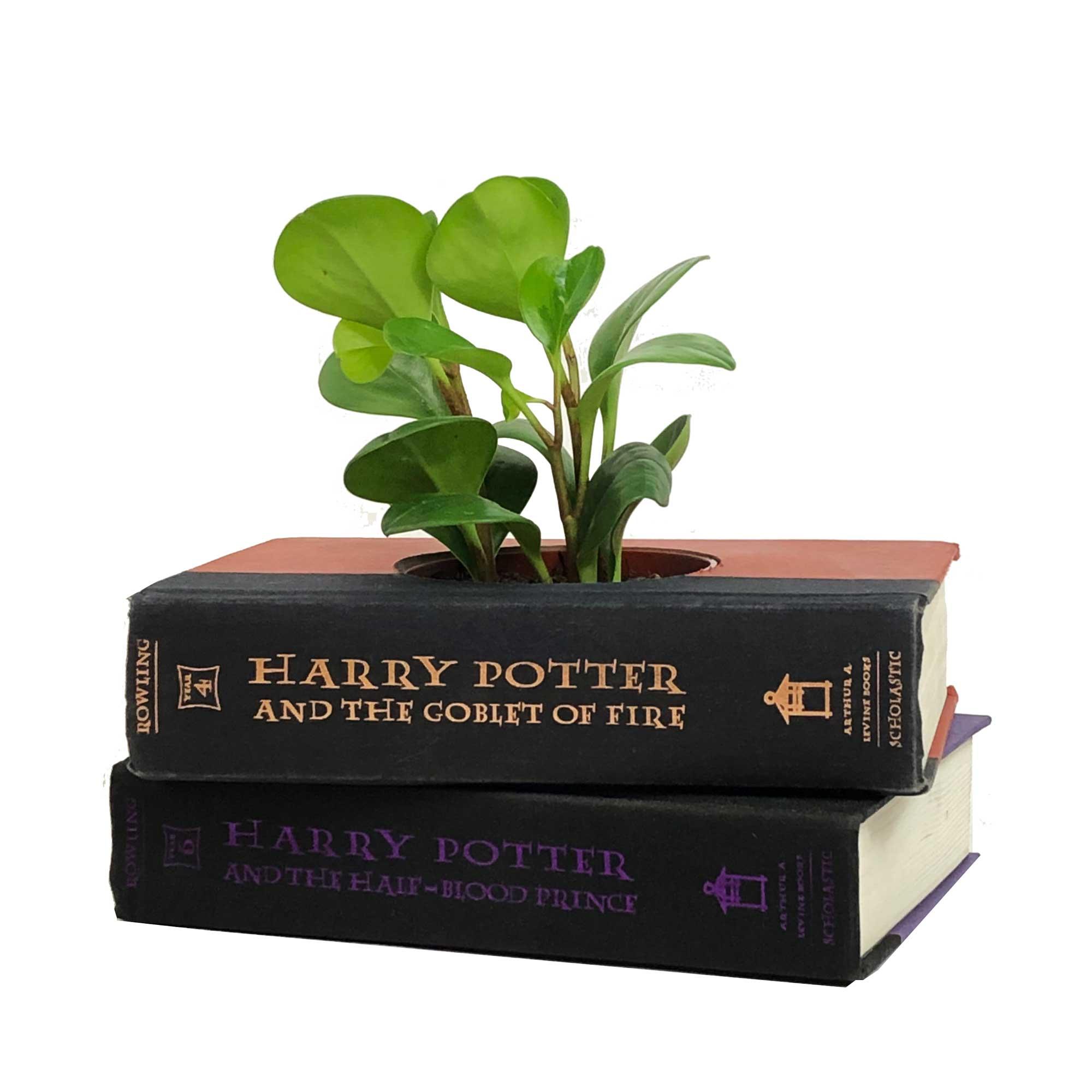 Harry-Potter2g
