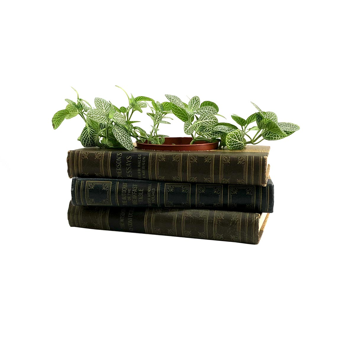 bookworm-room-decor