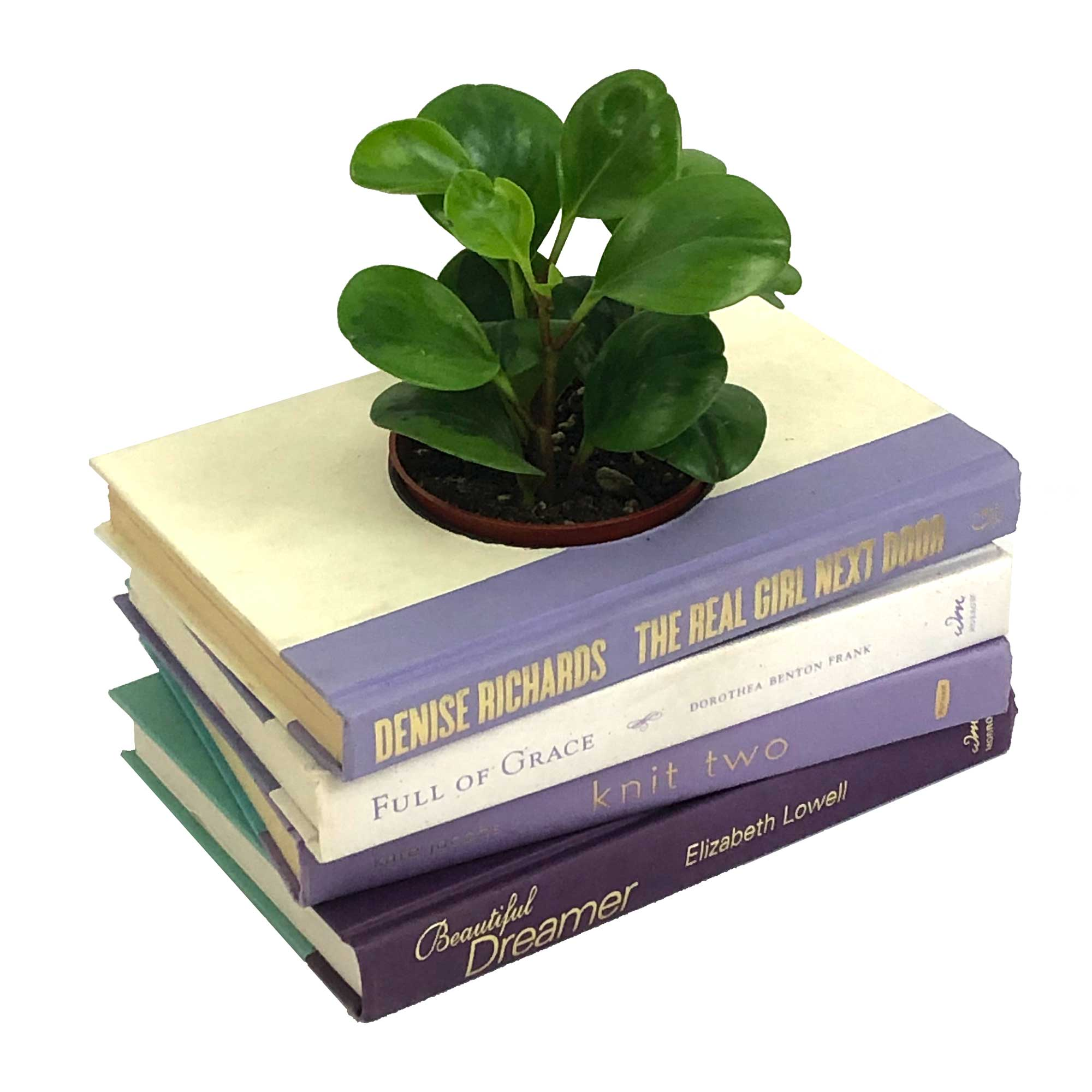 purple-planter1b