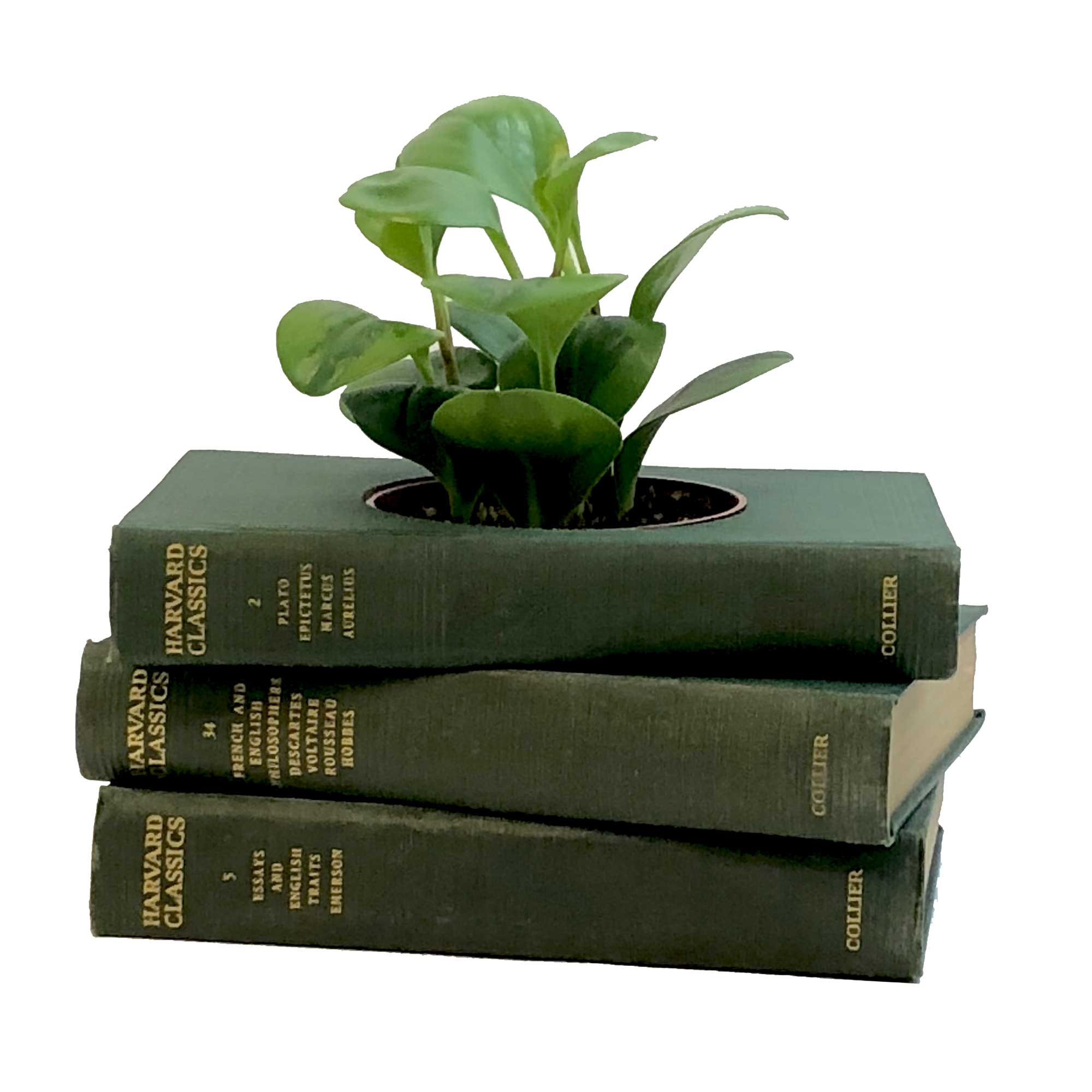 unique-planters-for-houseplants
