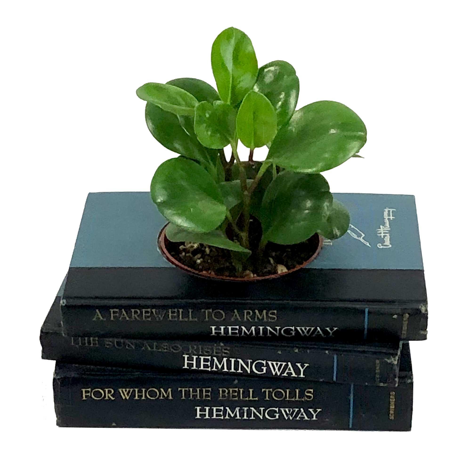 Hemingway1c