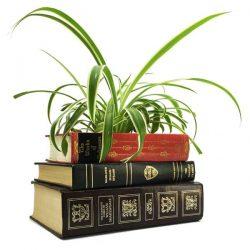 William Shakespeare Book Planter