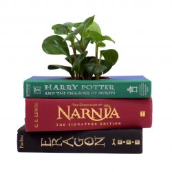 Fantasy Book Planter