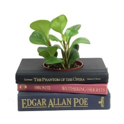 Gothic Novels Book Planter