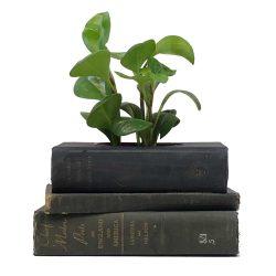 Vintage Poetry Book Planter